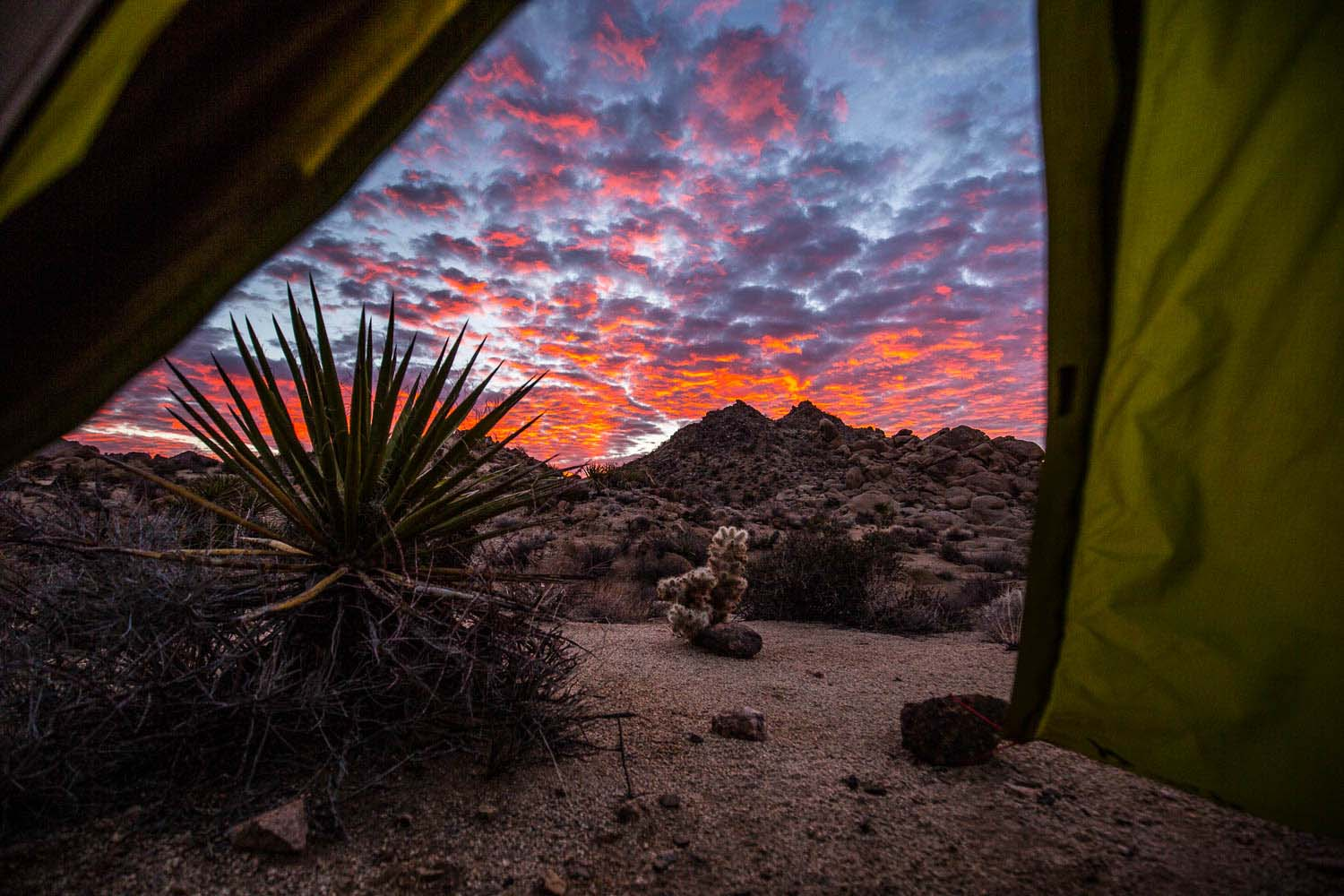 Joshua tree, backpacking at Indian Cove