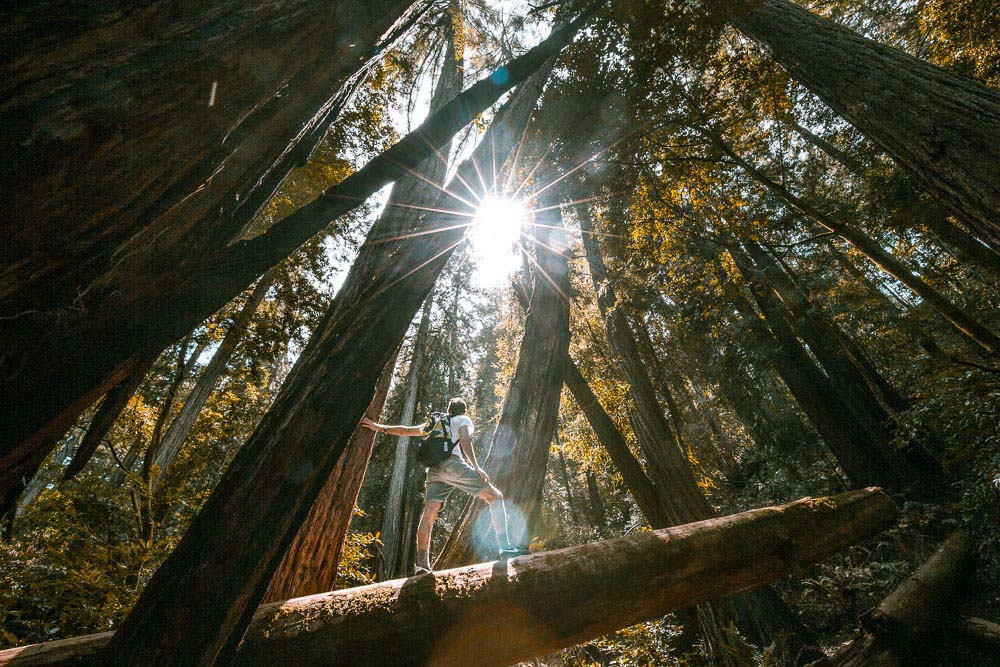 Redwoods in Muir Woods, San Francisco