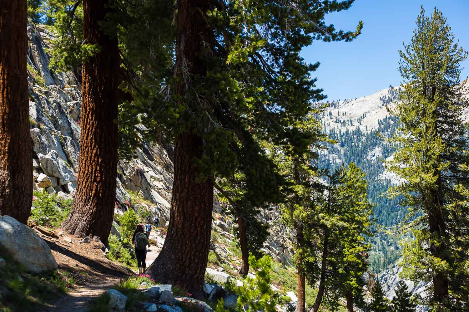 Sequoia Trees along the Lakes Trail